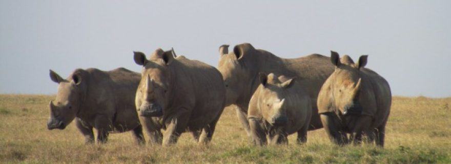 Why anthropology matters: a critique on De Social Club's take on hunting safaris