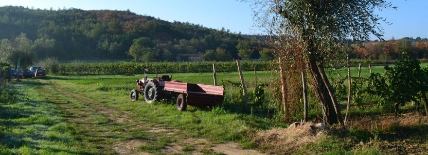 "Community in Economic ""Kriza"": Broken Promises and Precarity in a Small Croatian Farming Community"