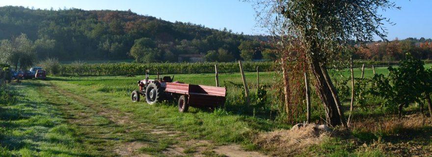 """Community in Economic """"Kriza"""": Broken Promises and Precarity in a Small Croatian Farming Community"""