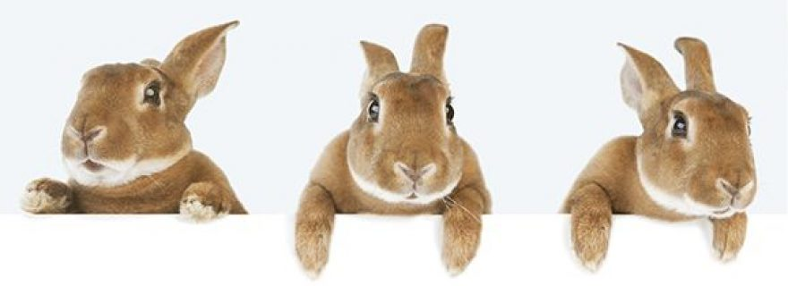 Food for Anthropologists: Hare or Rabbit for Christmas?