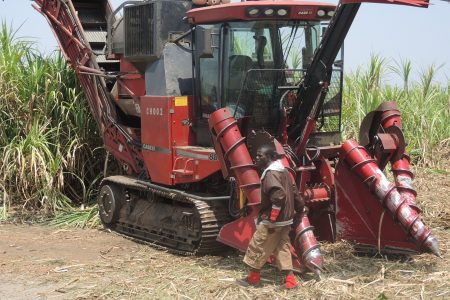Creating a Story: Large-Scale Bioenergy Production and Its Critics in Sierra Leone